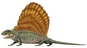 Dimetrodon was related to mammals; it was definitely not a dinosaur! Image credit: DiBgd