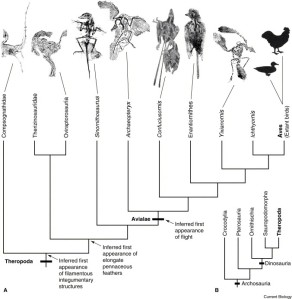 "A bird ""family tree."" Image source: Introduction to Birds"