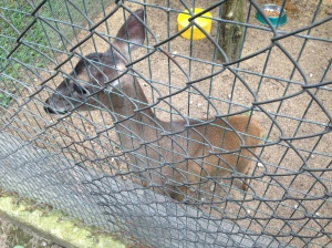 Even white-tailed deer, which are practically a plague in the United States, are extremely rare here.