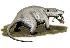 The largest mammal in the Cretaceous Period, Repenomamus, was about the size of a badger. Image credit: Nobu Tamura